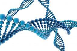 Test Genético Preimplantacional (PGT)